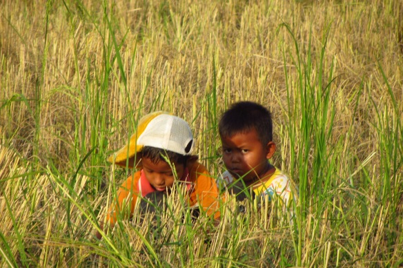 Her kids stared at me, bewildered, from behind some rice stalks. Photo taken by Samnang, 12, from APCA.