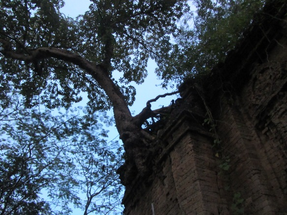 A temple overgrown with trees dating back as far as the temples of Angkor. Battdung Mountain, Kampong Speu Province.