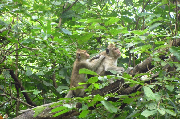 Monkeys on Oudong Mountain in Kampong Speu Province.