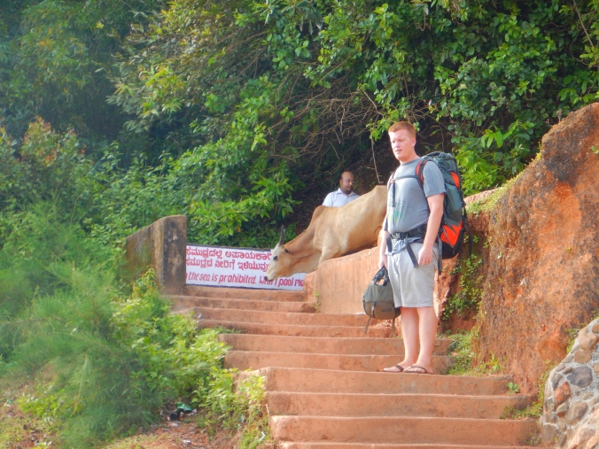 At Gokarna we also learned that cows CAN walk down stairs. Myth busted!